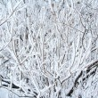 Branches of a winter tree — Stock Photo