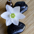 Spa black stones with white flower - Stock Photo