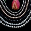 White, black and pink pearls with tulip — Stock Photo