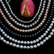 Stock Photo: White, black and pink pearls with tulip