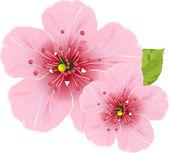Kirschblüten blumen — Stockvektor