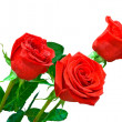 Three bright red roses on white backgrou — Stock Photo #1124339