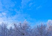 Vinterlandskapet. — Stockfoto
