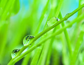 Macro morning dew on the green grass for — Stock Photo