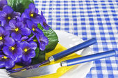 Violets on a plate — Stock Photo