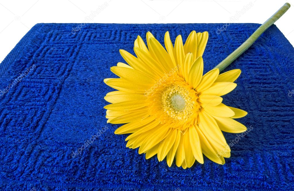 Yellow flower on a dark blue terry towel and a white background  Stock Photo #1125720
