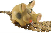 Pig a coin box — Stock Photo