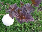Egg in grass — Stock Photo