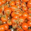Red tomatoes-cherry — Stock Photo