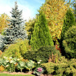 Stock Photo: Coniferous garden