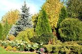 Coniferous garden — Stock Photo