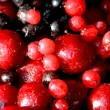 Frozen red and black berries — Stock Photo