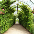 Stock Photo: Vine arbor tunnel