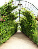 Vine arbor tunnel — Stock Photo