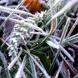 Green grass with ice crystals — Stock Photo