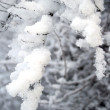 Snow covered bush — Stock Photo