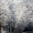 Road in winter forests — Stock Photo
