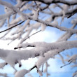 Stock Photo: Snow covered branch