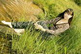 Rural relaxing — Stock Photo