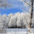 Frozen forest — Stock Photo #1267100