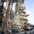 Road in winter forest — Stock Photo #1267110