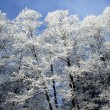 Stock Photo: Frozen forest in sun day