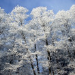 Frozen forest in sun day — Stock Photo #1267117