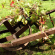 Floral wheelbarrow — Stock Photo