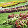 Stock Photo: Suumer flowerbed