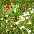 Meadow with July flowers - Stock Photo