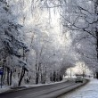 Road in snow forest — Stock Photo