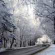 Road in snow forest — Stock Photo #1297309