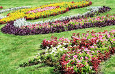 Suumer flowerbed — Stock Photo