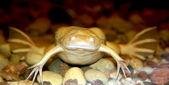 Exotic white frog — Stock Photo