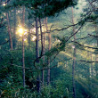 Stock Photo: Rays of sun in forest