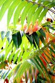 Autumn decorative large green leaves — Stock Photo