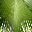 Palm leaf texture — Stock Photo #1320657