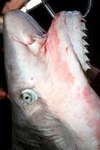 Shark for sale — Stock Photo
