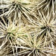 Cactus needles - Photo
