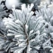 Frozen needles of pine tree — Stok fotoğraf