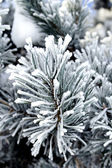 Frozen needles of pine tree — Stock Photo