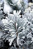 Frozen needles of pine tree — Stock Photo