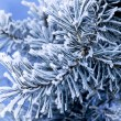 Frost on pine — Stock Photo #1666705