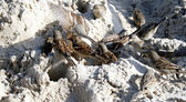 коричневый воробьи — Стоковое фото