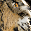Stock Photo: Portrait of wise owl