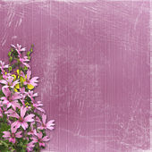 Pink abstract background — Stock Photo