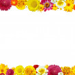 bloem kader voor foto — Stockfoto