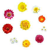 Ten flowers in circle — Stock Photo