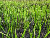 Grass green meadow macro landscape — Stock Photo