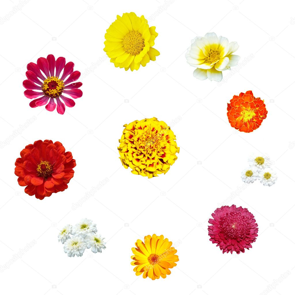 Ten flowers in circle isolated  Stock Photo #1225689